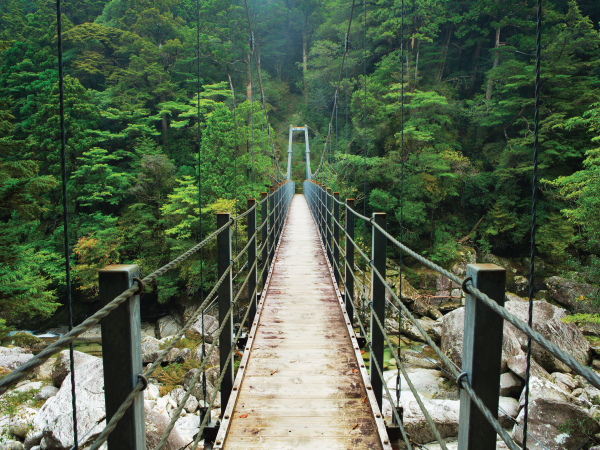 Nature Rainforest Bridge Yakushima Luxury Travel Japan Regency Group