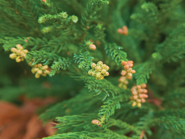 Nature Cryptomeria Japonica Luxury Travel Japan Regency Group