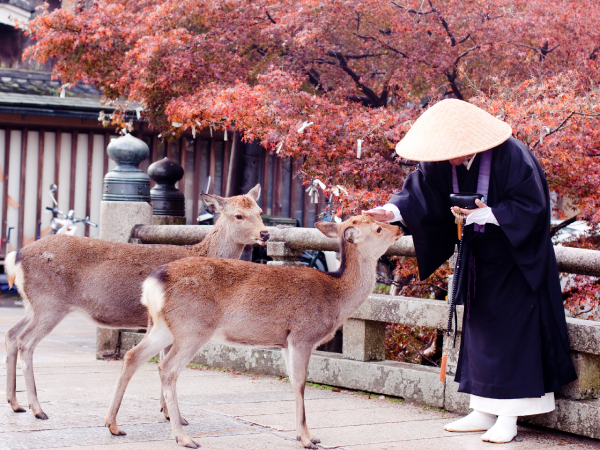 Family Buddhist Monk Deers Luxury Travel Japan Regency Group