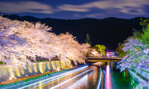 Cherry Blossom Night Scenery Luxury Travel Japan Regency Group