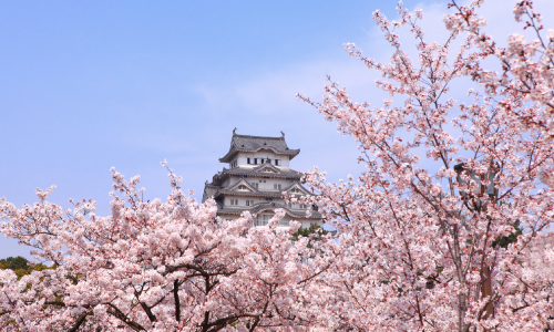 Cherry Blossom Osaka Luxury Travel Japan Regency Group