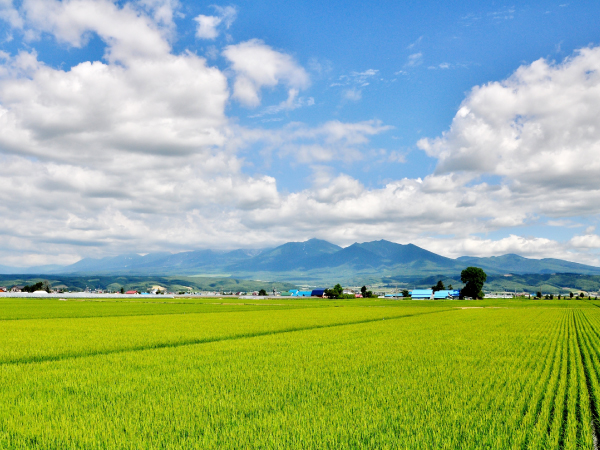 Hokkaido Rice Field Luxury Travel Japan Regency Group