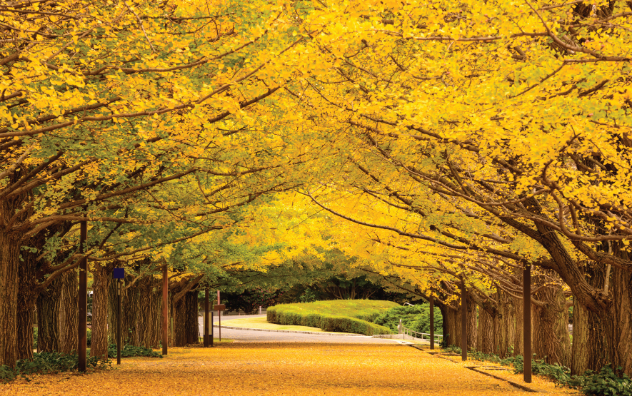 Autumn Park Tokyo Luxury Travel to Japan Regency Group