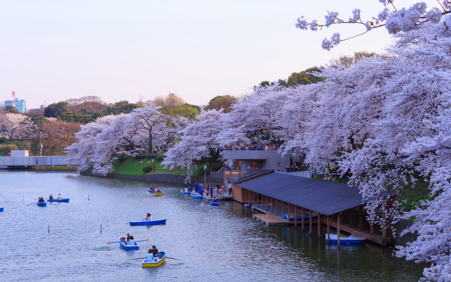 Cherry Blossoms Season Tokyo Luxury Travel to Japan Regency Group
