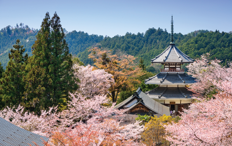 Cherry Blossoms Season Yoshinoyama Luxury Travel to Japan Regency Group