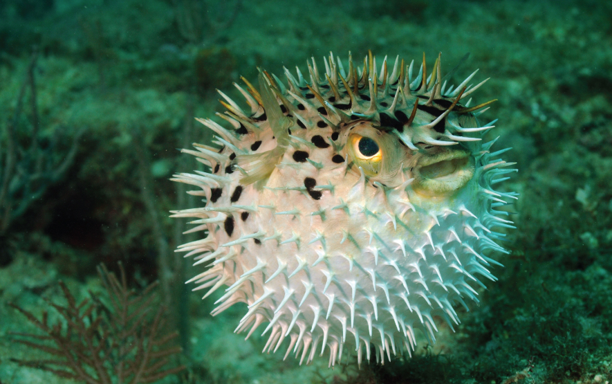 Blowfish Japan Luxury Travel Regency Group