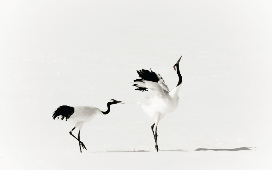 Hokkaido Bird Watching Crane Luxury Travel Japan Regency Group