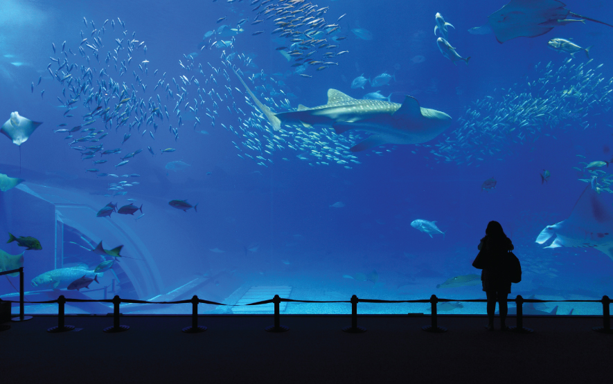 Aquarium Okinawa Regency Group Luxury Travel Japan