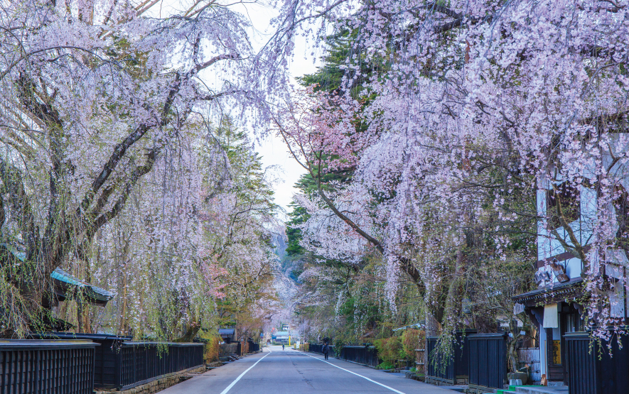 Weeping Cherry Trees Luxury Travel Japan Regency Group