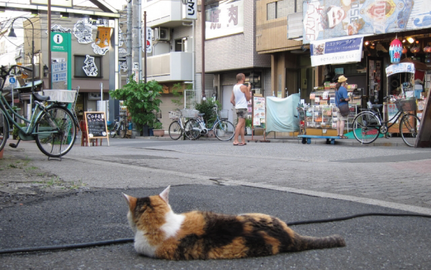 Cat Yanaka Travel Japan Regency Group