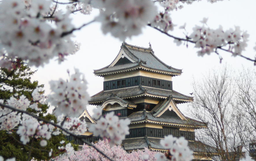 Matsumoto Castle During Cherry Blossom