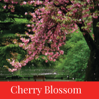 cherry blossom travel japan regency group