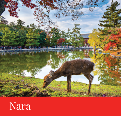 destination nara japan regency group