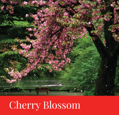 itinerary cherry blossom japan regency group